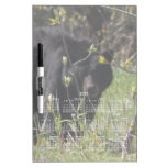 Mirar a escondidas el oso; Calendario 2013 Pizarra Blanca