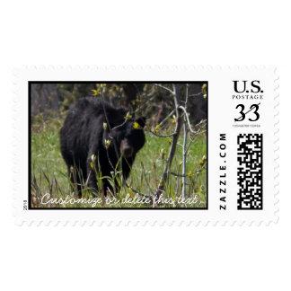 Mirar a escondidas el oso Personalizable