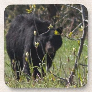 Mirar a escondidas el oso posavasos de bebidas