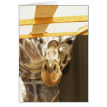 Mirar a escondidas la tarjeta de la jirafa