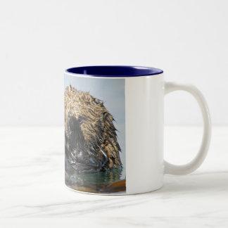 Mirar a escondidas la taza de la nutria de mar