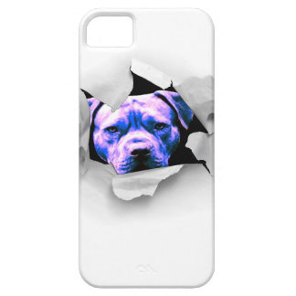 Mire a escondidas un pitbull del abucheo iPhone 5 Case-Mate protector