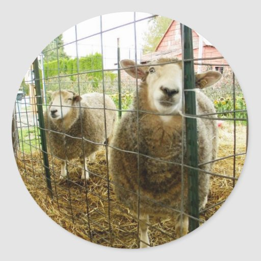 Mire a escondidas una oveja del abucheo pegatina redonda