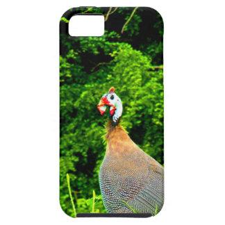Mire adelante para amar y guadeloup de las aves de iPhone 5 carcasa