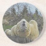 Mire la vida con un oso polar de la perspectiva fr posavasos personalizados