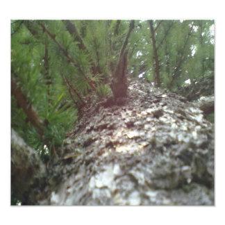 Mire para arriba el árbol cojinete