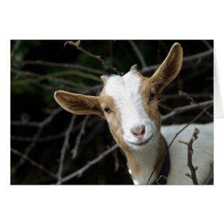 """¡""""Mire quién es! Una cabra """" Tarjeta Pequeña"""