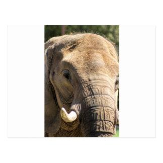 Mire un elefante en la cara postal