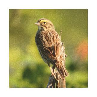 Mirlo de alas rojas, hembra, Ridgefield Impresión En Lienzo Estirada