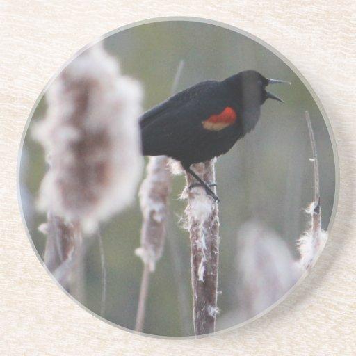 Mirlo de alas rojas (phoeniceus del Agelaius) Posavaso Para Bebida