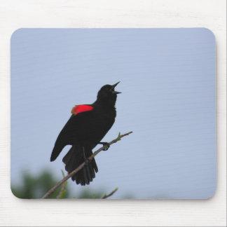 Mirlo de alas rojas alfombrilla de raton