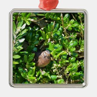 Mirlo en un arbusto del laurel adorno navideño cuadrado de metal