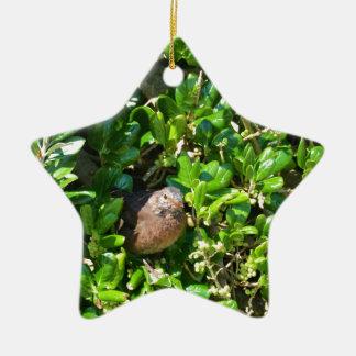 Mirlo en un arbusto del laurel adorno navideño de cerámica en forma de estrella