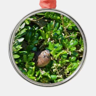 Mirlo en un arbusto del laurel adorno navideño redondo de metal
