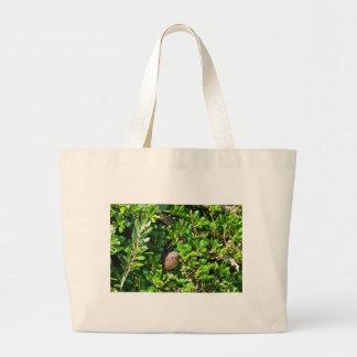 Mirlo en un arbusto del laurel bolsas