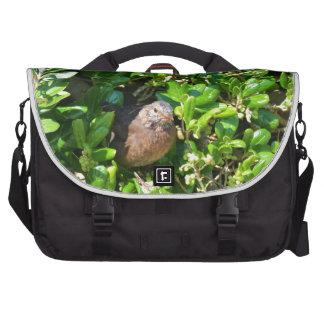 Mirlo en un arbusto del laurel bolsa para ordenador