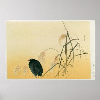 Mirlo, período de Edo Poster