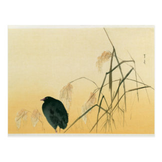 Mirlo, período de Edo Postal