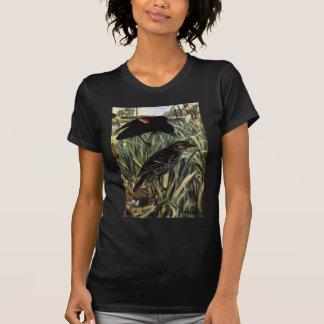 Mirlos de alas rojas y jerarquía en Cattails Camisas