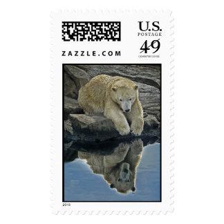 Mirror Mirror Polar Bear Postage Stamp