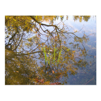 Mirrored Branches Postcard