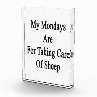 Mis lunes están para tomar el cuidado de ovejas