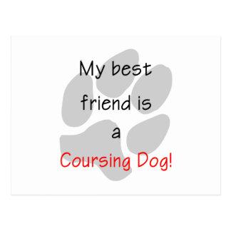 Mis mejores amigos son un perro que cursa postal