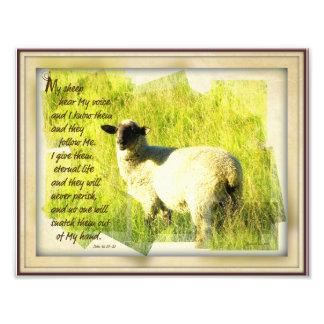Mis ovejas oyen mi impresión 8,5 x 11 de la voz fotografía