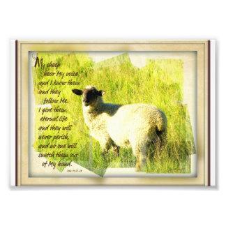Mis ovejas oyen mi voz 5 x 7 impresion fotografica