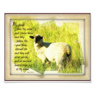 Mis ovejas oyen mi voz 8 x la impresión 10 fotografías