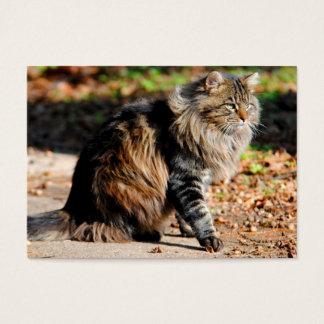 Mis tarjetas de visita del gato de Coon de Maine