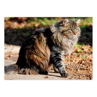 Mis tarjetas de visita del gato de Coon de Maine d