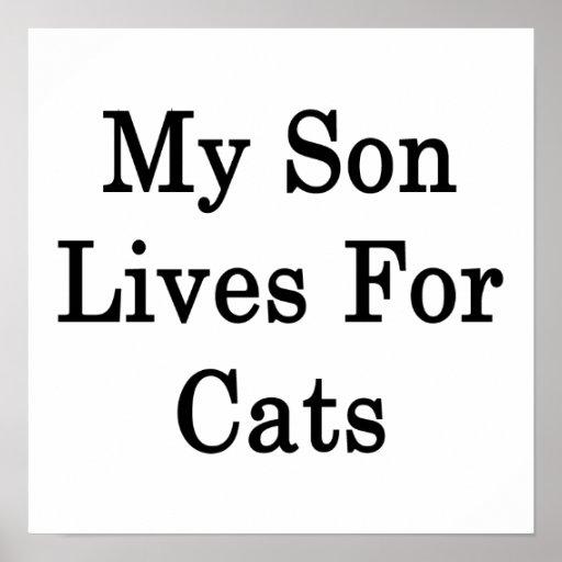 Mis vidas del hijo para los gatos poster