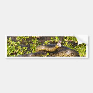 Miscellaneous - Anaconda & Leaves Pattern Car Bumper Sticker