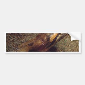Miscellaneous - Anaconda & Stone Pattern Car Bumper Sticker