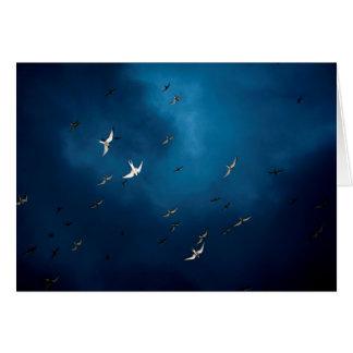 Miscellaneous - Arctic Tern & Blue Sky Pattern Card