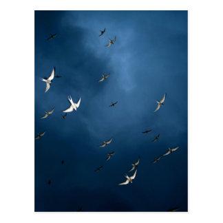 Miscellaneous - Arctic Tern & Blue Sky Pattern Postcard
