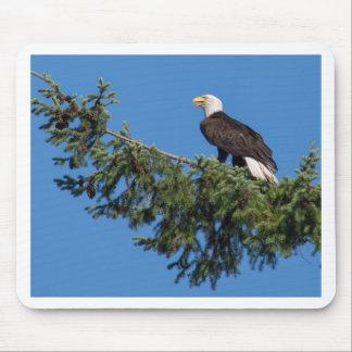 Miscellaneous - Bald Eagle & Fuck Tree Pattern
