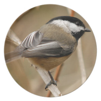 Miscellaneous - Black-Capped Chickadee Pattern Plates