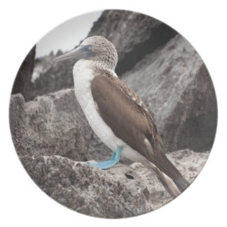 Miscellaneous - Blue-Footed Bird & Pattern Rock'n' Party Plates