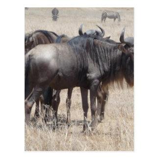 Miscellaneous - Blue Wildebeest Pattern Portrait Postcard