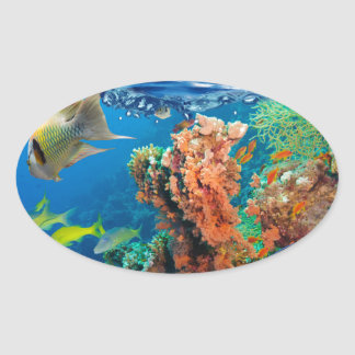 Miscellaneous - Boat & Coral Reef Pattern Nineteen Oval Sticker