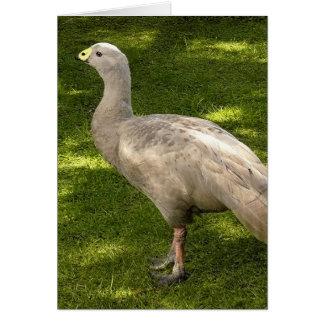 Miscellaneous - Cape Barren Goose Shadows & Light Card