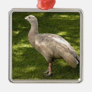 Miscellaneous - Cape Barren Goose Shadows & Light Metal Ornament