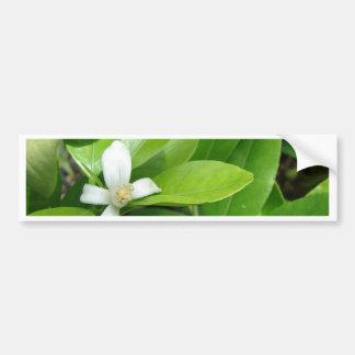 Miscellaneous - Citrofortunella Plant Pattern