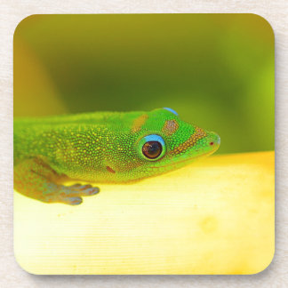 Miscellaneous - Colorful Bent-Toed Gecko Pattern Drink Coaster
