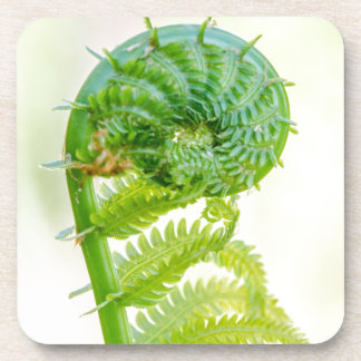 Miscellaneous - Fiddlehead Fern (Bent Leaf) Beverage Coaster