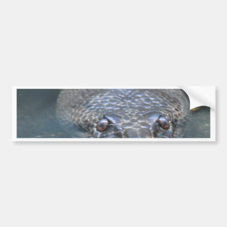 Miscellaneous - Green Pattern Anaconda Car Bumper Sticker