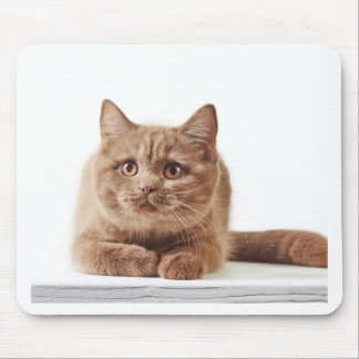 Miscellaneous - Lovely Kittens Five Mouse Pad