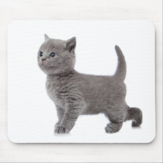 Miscellaneous - Lovely Kittens Furnace Mouse Pad
